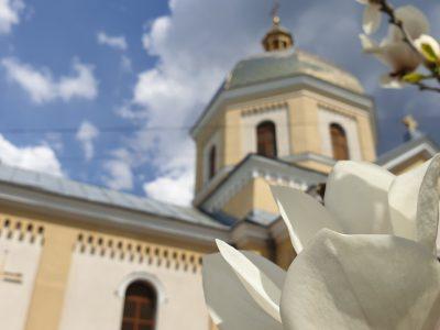 Цвіте магнолія біля храму.